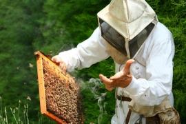 apiculteur salaire